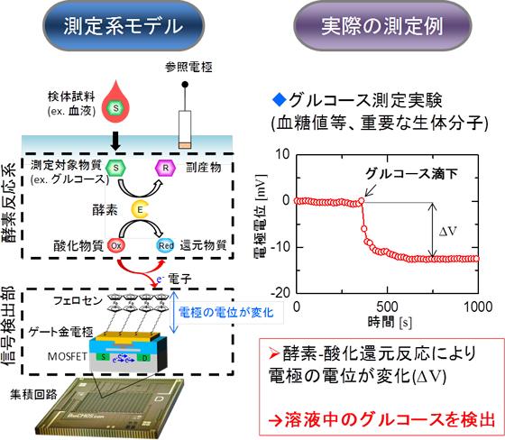 拡張ゲートFET型レドックスセンサを用いたグルコース検出