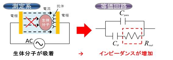 インピーダンス検出型バイオセンサ集積回路