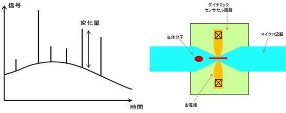マイクロ流路系による測定